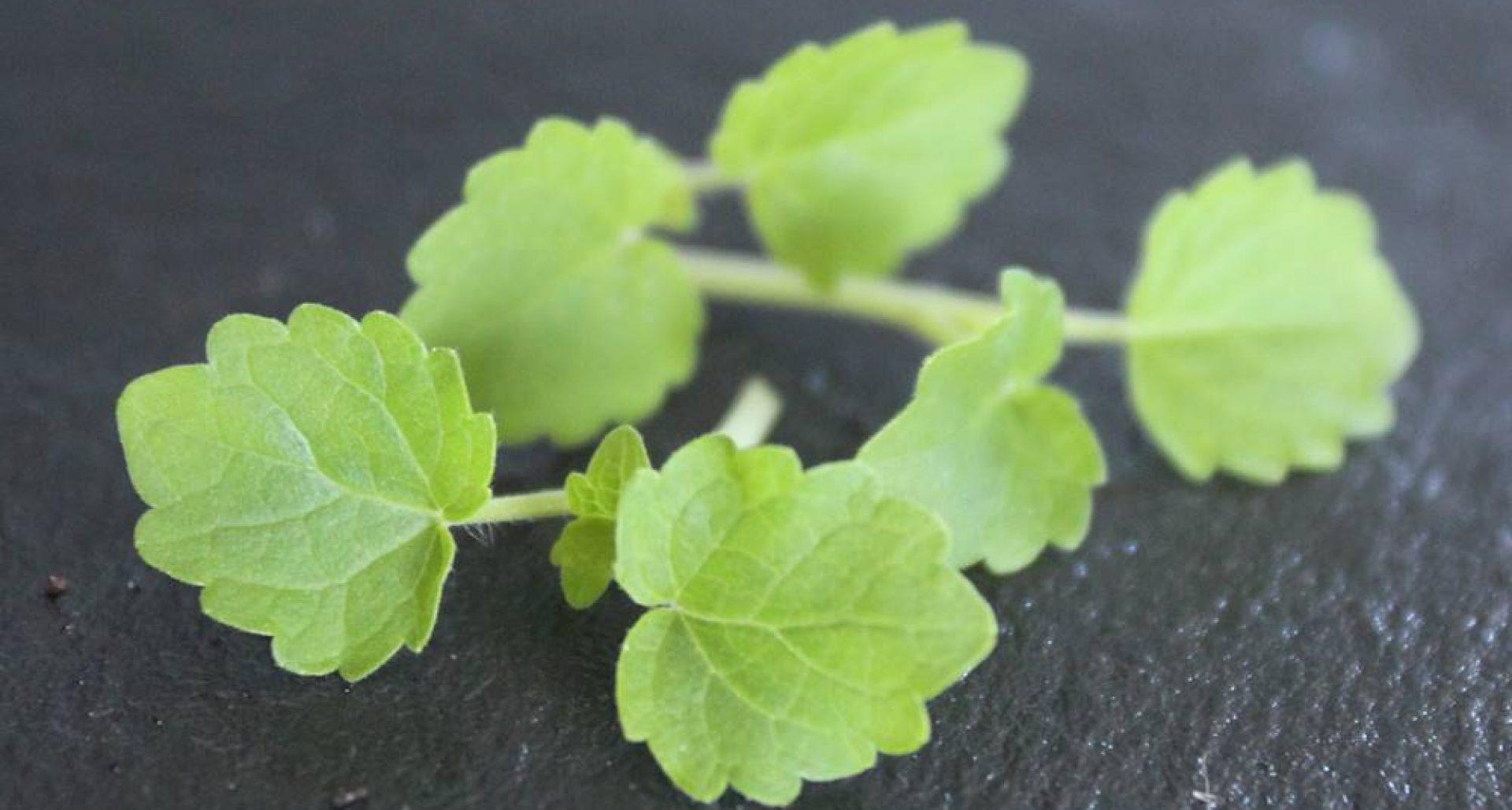 kiemgroenten, cressen en tuinkers Jettocress