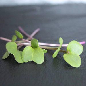 groen hartvormig blad met paarse stengel