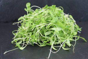 afgesneden tuinkers met frisse groene kleur