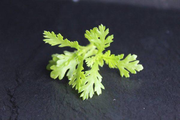 meerdelig geel gekarteld blad