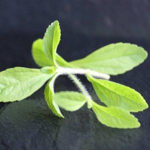 langwerpig lichtgeel blad
