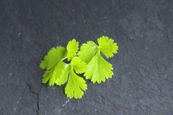 groen gekarteld blad